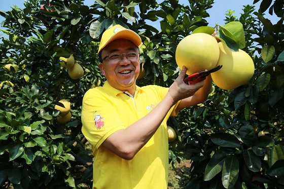 2020广东梅州柚·大埔蜜柚开采节暨产销对接会隆重召开
